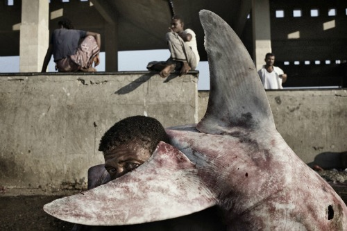 Picture of the Year International 69 Edition, Yuri Kozyrev, NOOR for TIME Magazine, SHARK